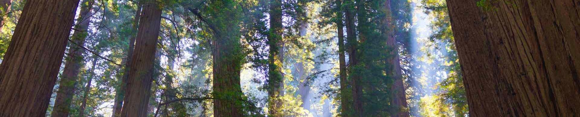 treeslice2